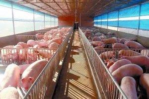 养猪场换新貌 创业致富有信心