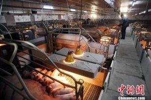 中国非洲猪瘟疫情防控工作取得阶段性成效