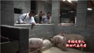 """大学生俯下身子当""""猪倌""""带动村民养猪致富"""