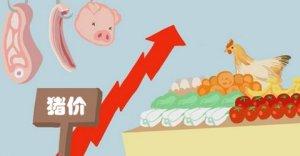 山东猪价连续四周上涨 未来或将继续走高
