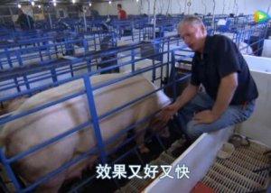 母猪产后奶水不足,导致小猪拉稀不止怎么办?