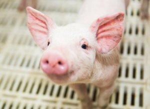 陆川生猪养殖场转型发展调查