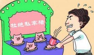 福建:私宰200多头生猪销售 德化男子获刑五年