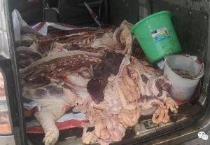 非法运输生猪肉还无证驾驶 面包车被交警查扣