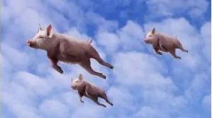 """岚皋打工仔的致富故事:不做主管做""""猪倌"""""""