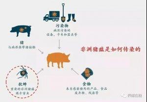 养殖户请注意 猪场感染非瘟的风险到底来自于哪里?!