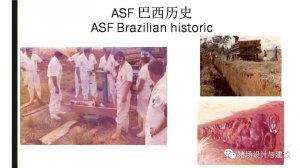 35年前巴西根除非洲猪瘟给我们的启迪