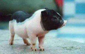 梁山智能化养猪助力脱贫致富