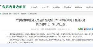 惠州猪价破12元/斤,广东猪价再度飙升