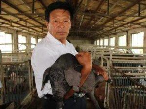 湖南:上半年生猪出栏下降8.7%,价格上涨9.6%
