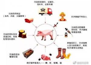 广西多地关停屠宰场 部分市场禁止销售猪肉