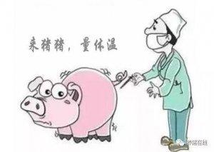 【技术】猪反复发烧是什么原因?告诉你症状以及防治措施