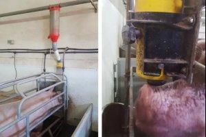 哺乳母猪饲喂系统,适合的才是最好的!