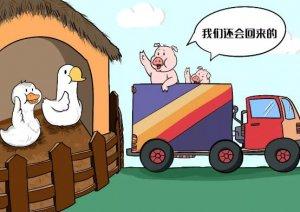 猪价暴涨1元/斤!打好复产持久战,要过几大关?