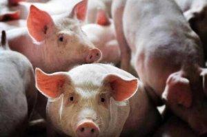 散养户为啥希望取消养殖补贴? 主要原因有以下8个方面!
