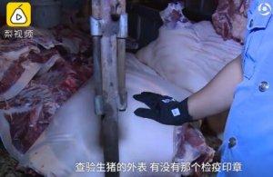 """小心""""白板肉""""!湖南湘潭查出疑似病死猪,执法人员收缴千斤无证肉"""